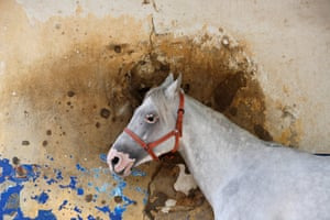 A bullet-riddled wall at the Beirut hippodrome