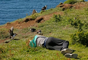 A boy pretends to take a nap among the puffins