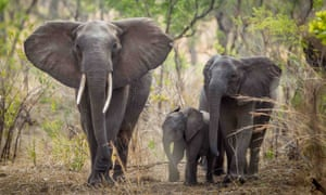 Elephants near Blantyre, Malawi