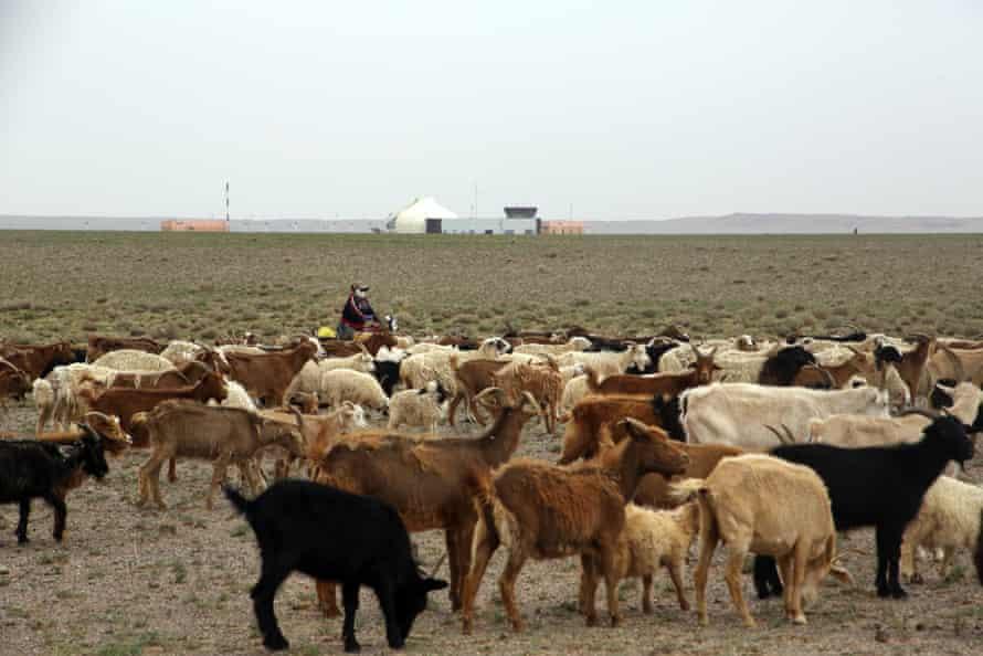 Herding animals Khanbogd