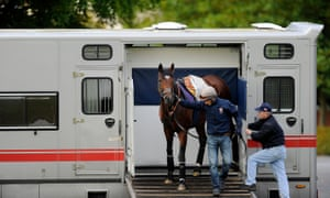 The racehorse Frankel is led out of a horsebox at Newmarket