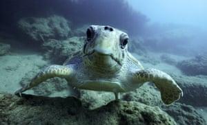 A turtle in the Aegean Sea off the island of Crete.