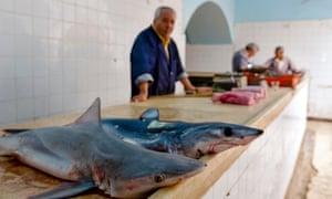 Houmt Souk fish market, Djerba Island.