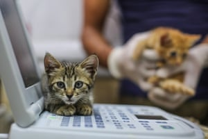 A kitten waits for a checkup