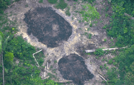 Evidence of an attack? Burnt communal houses of uncontacted Indians, pictured in December 2016, could be signs of another massacre in the region.
