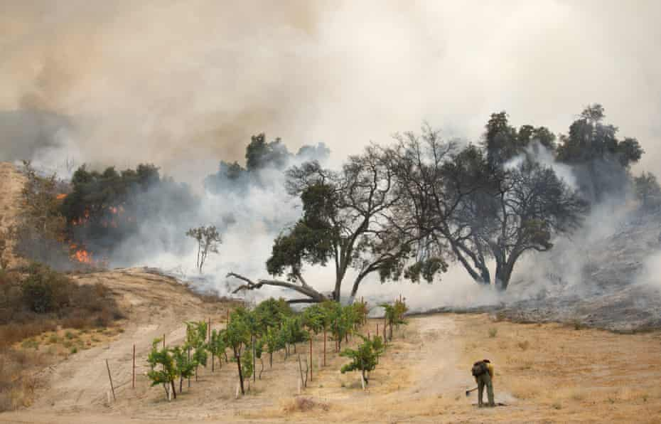 A firefighter clears brush while battling the Holy wildfire in Corona, California.