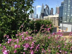 Goodman's fields in Tower Hamlets, one of the areas in London that has had little wildlife in the past.