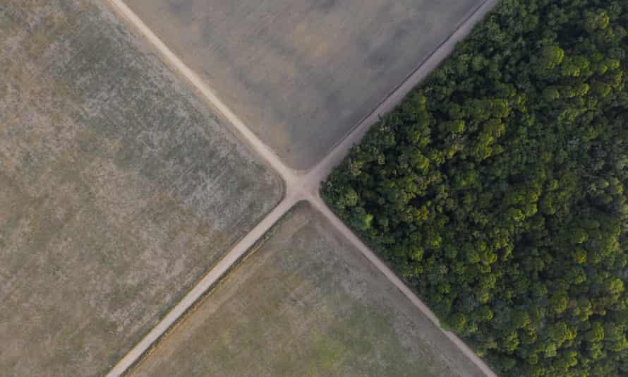 Soy fields in Belterra, Para state, Brazil.