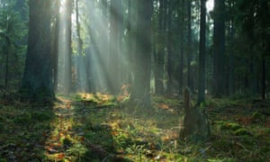 Pictured is Poland's flagship UNESCO-protected Bialowieza Forest at sunrise.