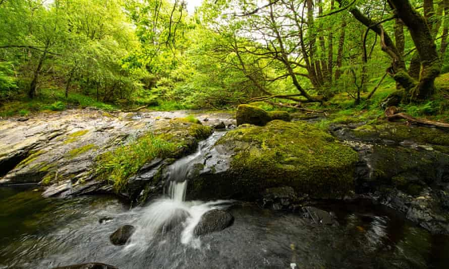The Celtic rainforest in Wales