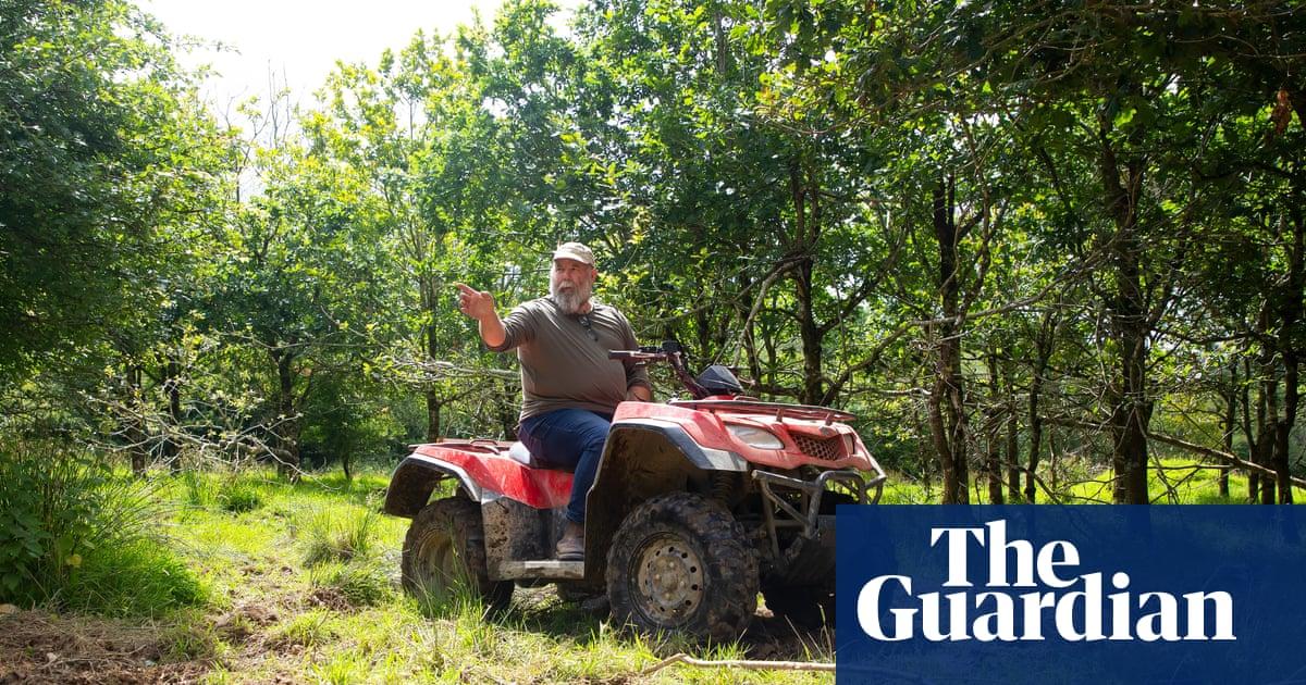 Wildcats, storks and beavers: my stay on a Devon rewilding farm