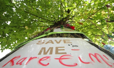 A poster attached to a mature elm tree in Sheffield, one of 6,000 facing the chainsaw.