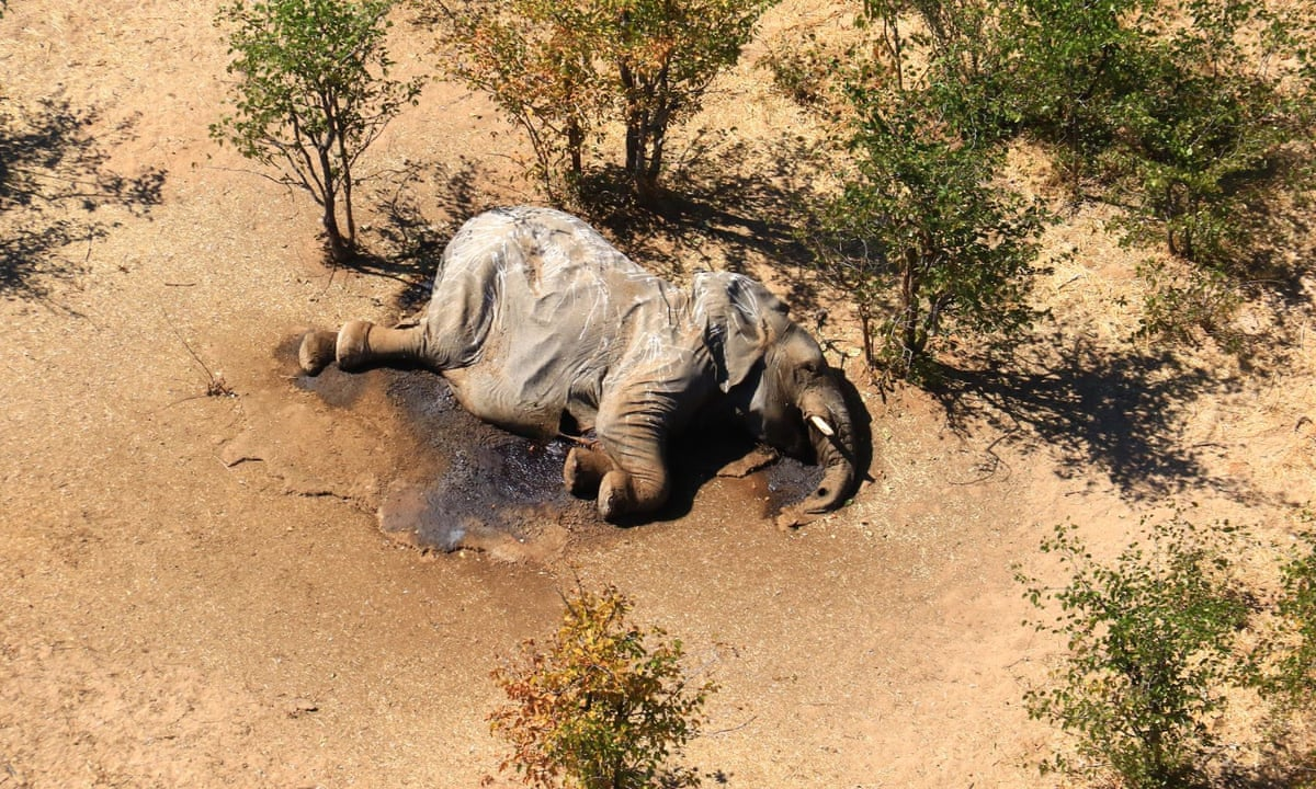 Hundreds of elephants dead in mysterious mass die-off ...
