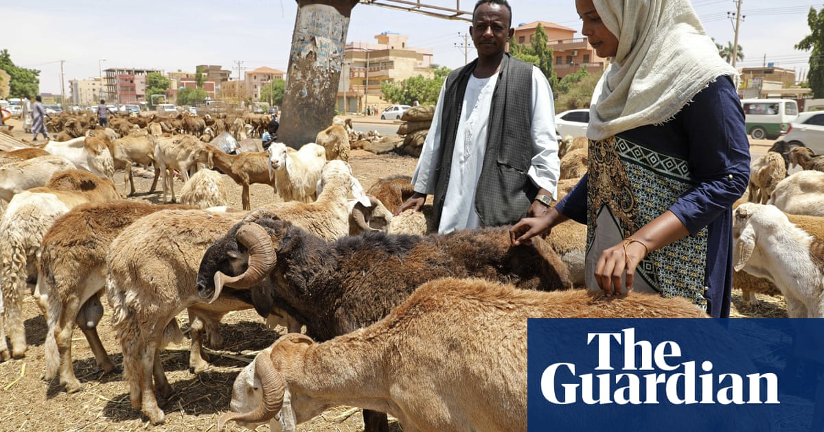 3,000 sheep die after live exports rejected by Saudi Arabia