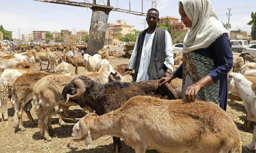Workers attend to sheep at a livestock market in Khartoum, Sudan.