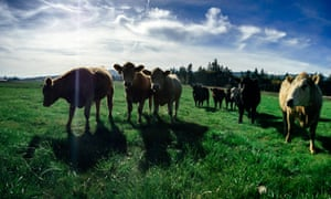 """Crowd Cow works with seven beef ranchers on the West Coast. Customers can then select the cuts of beef they wish to purchase – once enough people have purchased enough beef, the cow """"tips"""". Customers receive their beef in as little as a few days."""