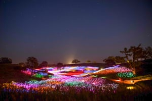 A solar powered fiber-optic Field of Light from artist Bruce Munro, in Paso Robles, California