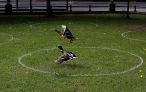 Ducks fly in the face of physical distancing guidelines in a park in Newcastle upon Tyne, UK