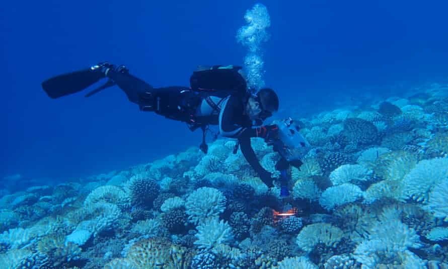 Field work on a coral reef in Hawaii