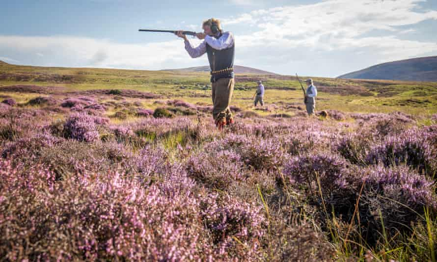 Grouse shooting on the moors in Scotland, which began on 12 August. In October the heather will be burned back, to provide fresh shoots for birds raised to be shot.
