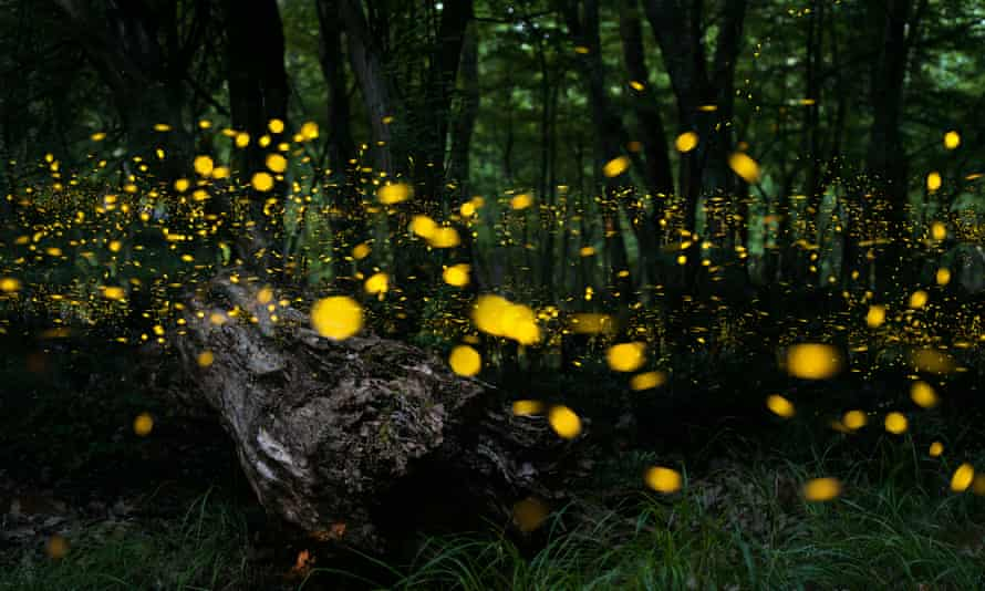 Fireflies in a forest.