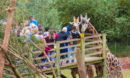 Visitors to South Lakes Animal Park feeding giraffes. The zoo was fined last year following the death of a zookeeper who was mauled to death by a tiger in 2013.