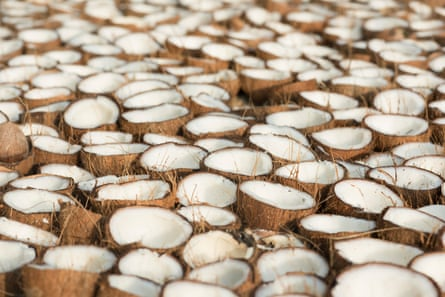 Coconuts are another vital part of the local economy