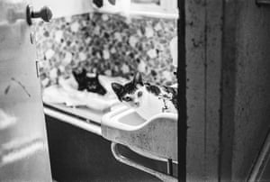 Cat Action Trust, London, 1980 from Jane Bown: Cats