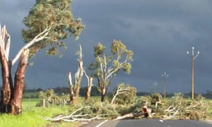 Trees toppled by high winds near Melrose in South Australia.