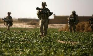 US marines on patrol in a poppy field in Helmand province, Afghanistan, in 2010