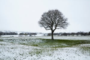 An oak tree in Greenmount, Greater Manchester, that was photographed by the Guardian's Christopher Thomond over a year to capture the changing seasons
