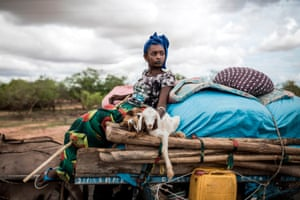 Barkedji, Senegal: A Fulani pastoralist carries two lambs on her cart as her family move on northwards. With the first rains come fresh grass and water for the Fulani herders' livestock.