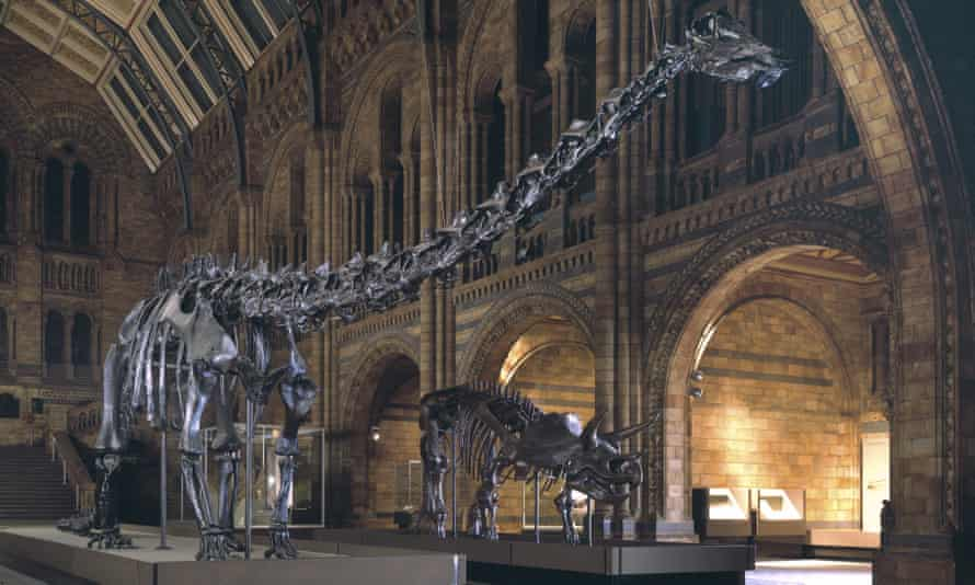 Dippy the dinosaur stands on display in the Natural History Museum in London.