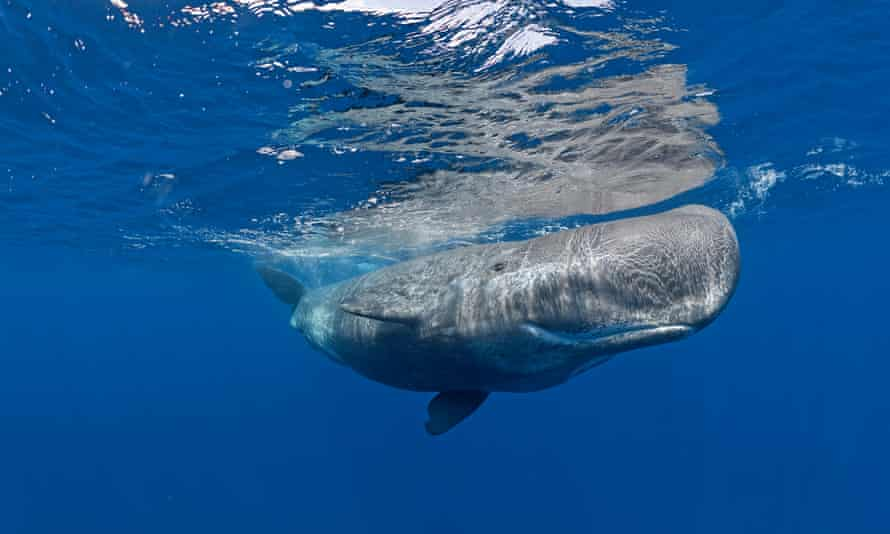 Sperm whales were spotted in the Canadian Arctic.