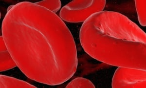 Red blood cells. Researchers found evidence that infusions of young blood could speed up muscle repair in older animals.