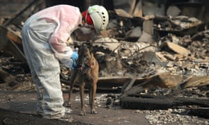 A rescue worker gives her cadaver dog water as they search the Paradise Gardens apartments for victims of the Camp fire in Paradise on Friday.