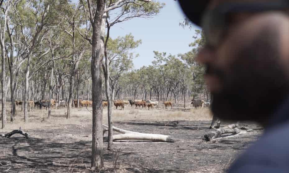 Indigenous ranger watches feral buffalo