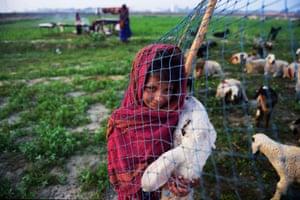 Daughter of Indian nomadic shepherds Mansa, 8, holds her favourite sheep Bhuri