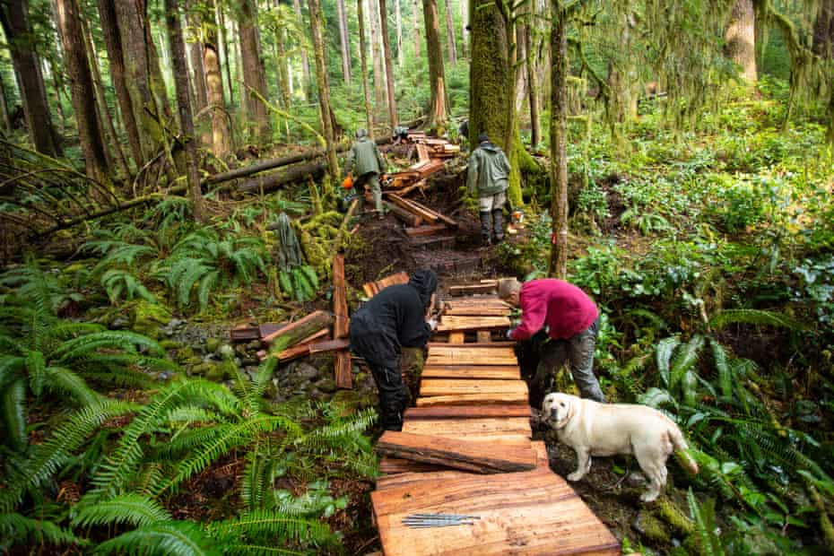 Activists build wooden walkways in a stand of ancient old growth forest that is set to be logged in the near future.