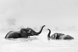 Elephants play at a waterhole in Trunk Puppets. More than 150 wildlife photographers are taking part in a sale of wildlife prints to raise money for African Parks, a South Africa-based conservation NGO