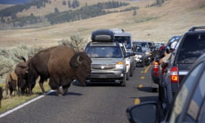 Tourists take photos of the animals in the Lamar Valley of Yellowstone National Park in Wyoming