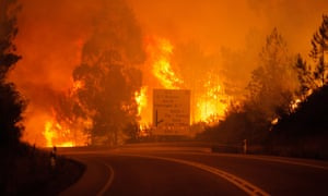 The fires in Leiria this summer killed more than 60 people.