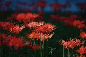The equinox flower.