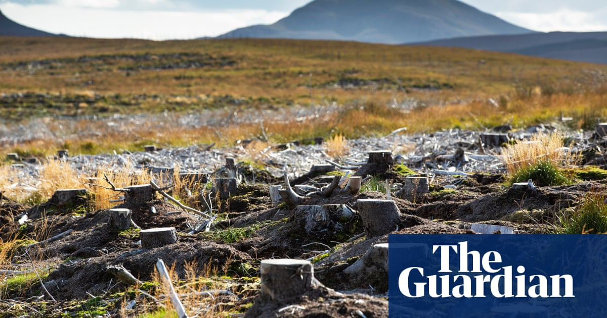 Image of article 'Rewild to mitigate the climate crisis, urge leading scientists'