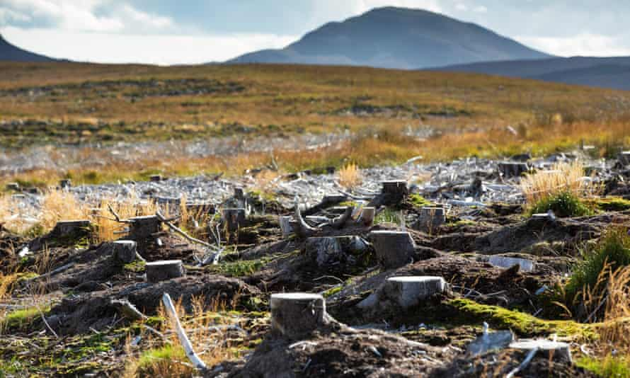 In the Flow Country, Scotland, restoration of the blanket bog, a vast natural carbon sink, involves removing forestry plantations