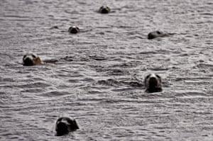 Foula is in the Atlantic Ocean, 20 miles west of Walls in Shetland