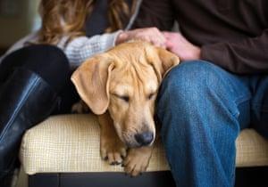 First place, Rescue: Cooper, a Labrador retriever mix