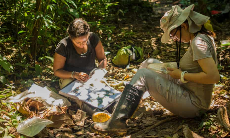 volunteers at the Crees project in the Peruvian Amazon.