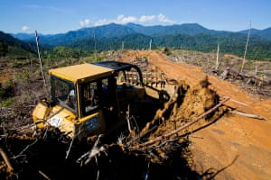 Illegal logging destroys wildlife habitat and encroaches on elephant migration routes