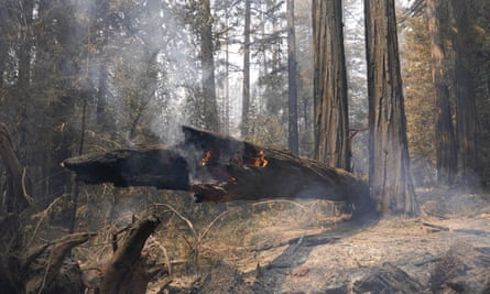 A fallen redwood tree continues to burn after the CZU Lightning Complex Fire passed through on Monday in Big Basin Redwoods state park, California.